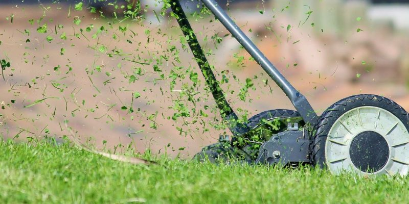 Summer lawn care in Australia